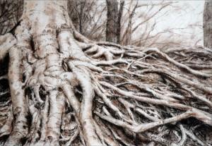 Roots beech Crayon/paper 28x40cm