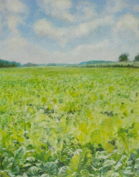 Beet-field. version 1