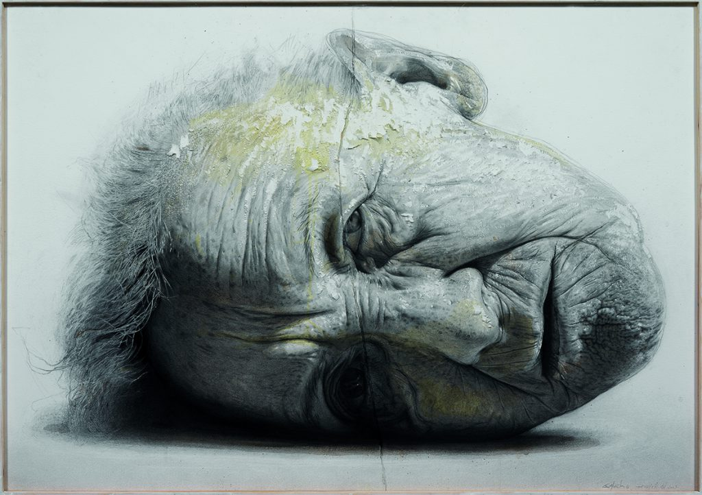 Golucho Retrato de insomnios MEAM