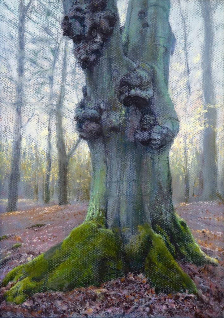 Bos van Driehuis, de beuk erin - pastel op papier - 35x25cm