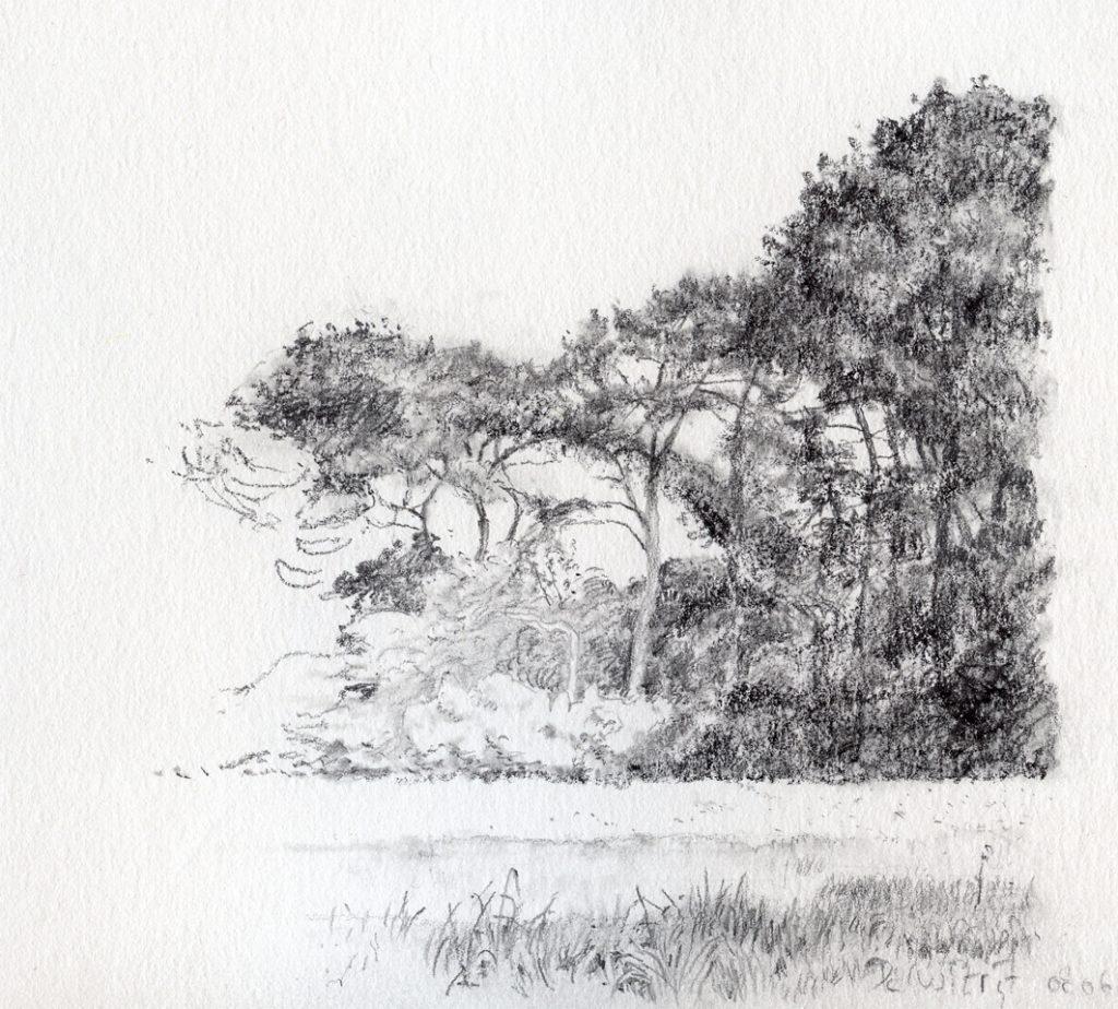 Bosrand De Witrijt, 2 - potlood op papier - 14x20cm