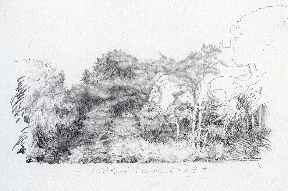 Bosrand De Witrijt,1 - potlood op papier - 14x20cm