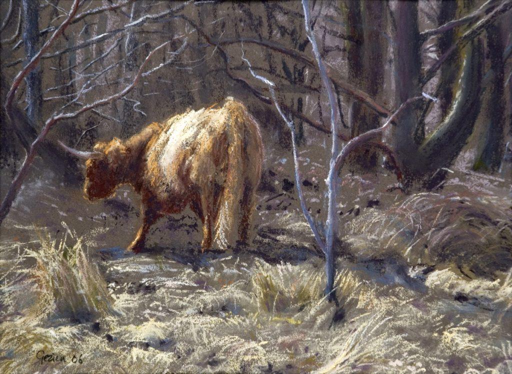 Schotse Hooglander in het bos - pastel op papier - 22x30cm
