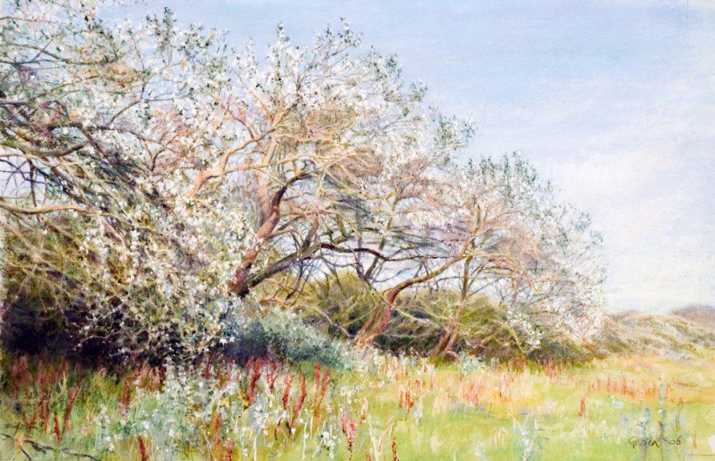 Witte Abelen in Egmondse duinen - waterverf en pastel op papier