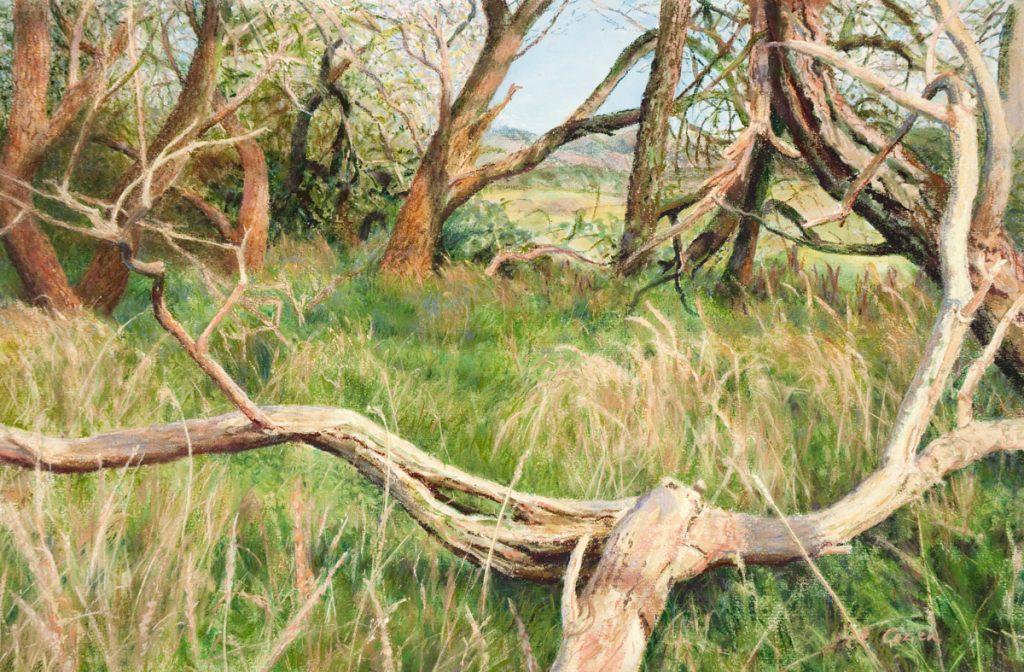 Verwaaide bomen in Egmondse duinen - Pastel/papier - 40x60cm