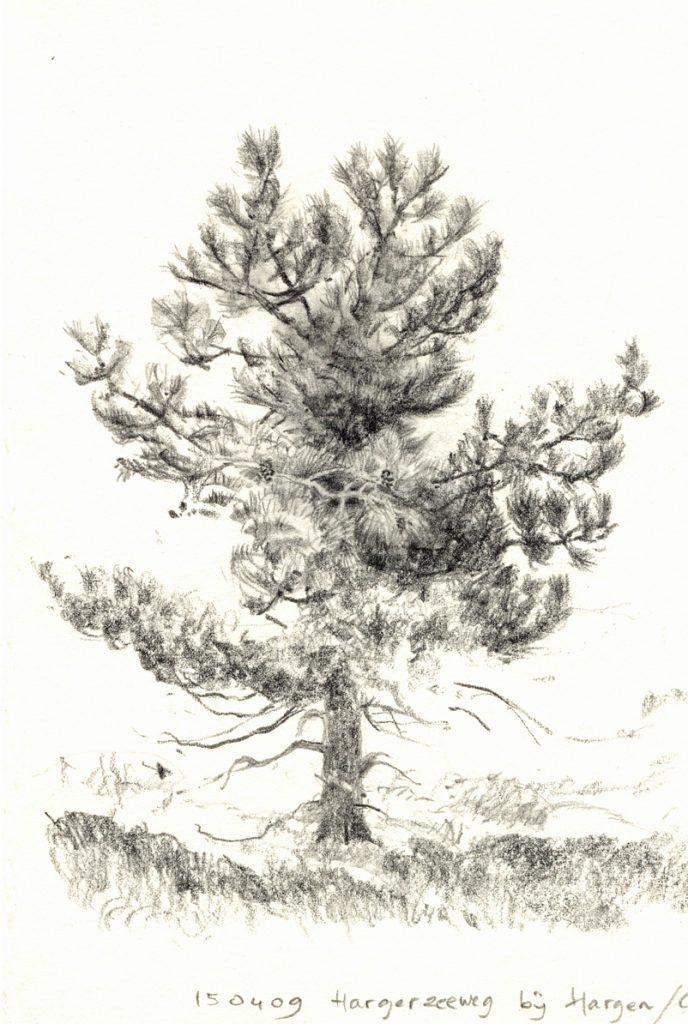 Den in de duinen - potlood op papier - 15x11cm