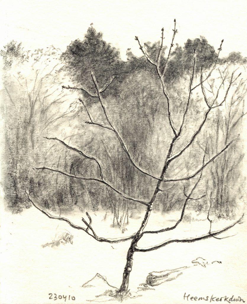 Bos in april 2010 – potlood op papier - 15x11cm